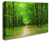 Forest Pathway Wall Art Canvas 8998-1014