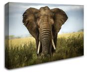Africa Safari Elephant Wall Art Canvas 8998-1108