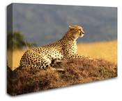 Africa Safari Cheetah Wall Art Canvas 8998-1111