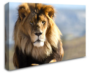 Africa Safari Lion Wall Art Canvas 8998-1112