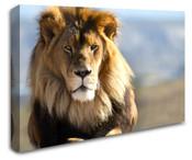 Africa Safari Lion Wall Art Canvas 8998-1112