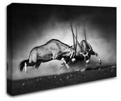Africa Safari Antelope Wall Art Canvas 8998-1116