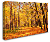 Autumn Woodland Wall Art Canvas 8998-1019
