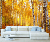 Autumn Forest Birch Tree Wall Mural