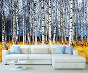 Autumn Forest Birch Tree Wall Mural 2