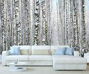Winter Forest Birch Tree Wall Mural