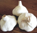 Bianca Spagnola Garlic Certified Naturally Grown