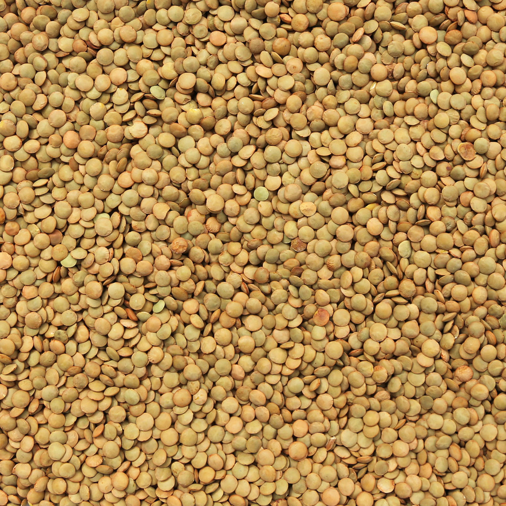 ORGANIC LENTILS, Green (Laird)