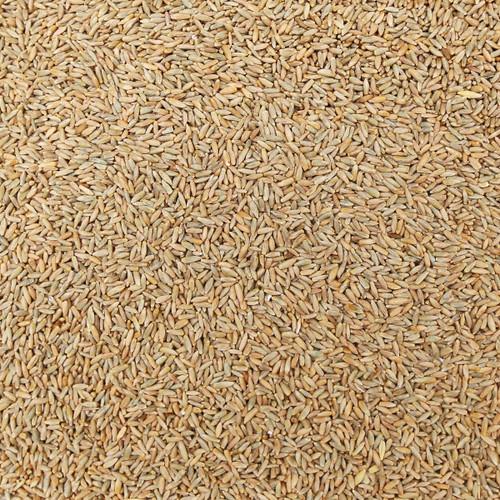 ORGANIC RYE, kernels