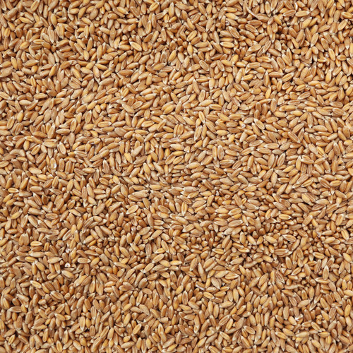 ORGANIC SPELT, kernels