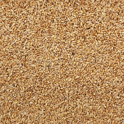 ORGANIC SOFT WHITE WHEAT, kernels