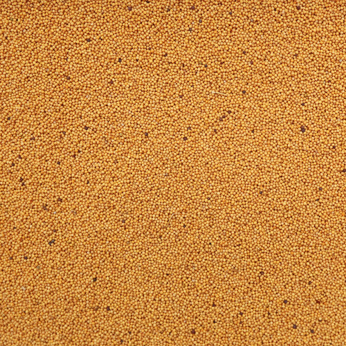 ORGANIC MUSTARD SEEDS, yellow, whole