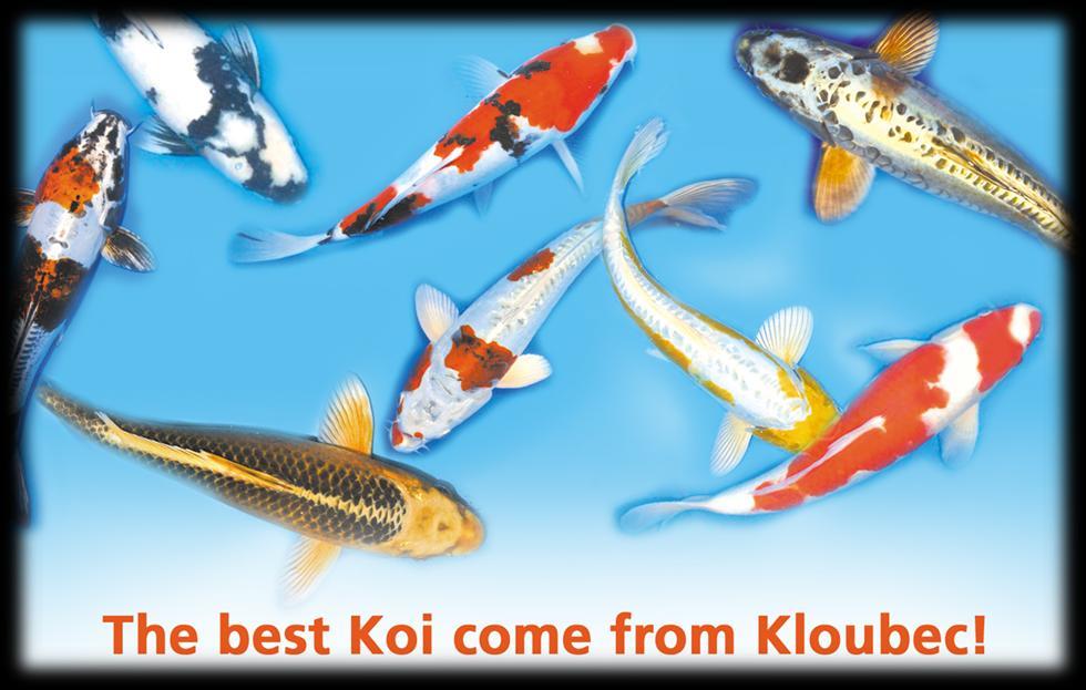 The_Best_Koi_Fuzzy.jpg