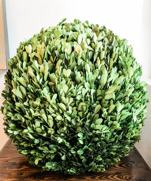 "Preserved Boxwood 16"" Ball"
