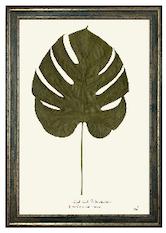 Split Leaf Philodendron Print