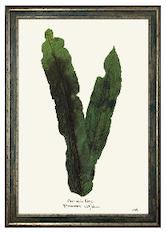 Crocodile Fern Print