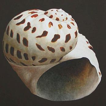 Seashell Print #1