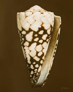 Seashell Print #2
