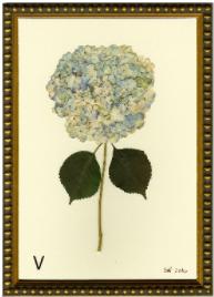 Hydrangea Print #5