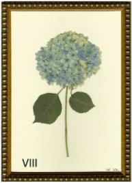 Hydrangea Print #8