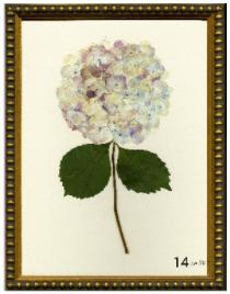 Hydrangea Print #14