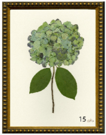 Hydrangea Print #15
