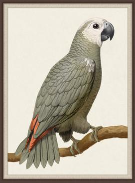 Gray Parrot | Laura Ramsey Furniture & Interiors