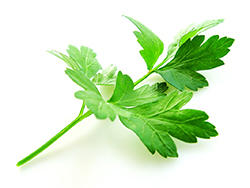 Parsley Plants for Sale: Buy Parsley Plants Online