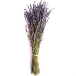 lavender-bunch.jpg