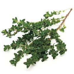 Thyme Plants for Sale: Buy Thyme Plants Online