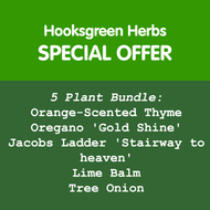 Herb Plant Bundle - May 2018 Special Offer