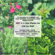August Offer - 'Outdoor Culinary Herbs
