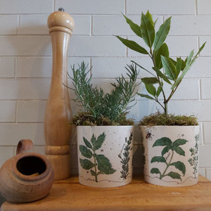 Fine Bone China Herb Planter | Buy Online