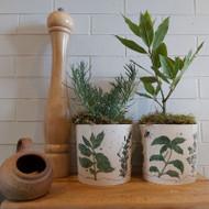 Fine Bone China Herb Planter   Buy Online