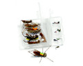 Rainy's Favorite Hopper/Dropper Trout Fly Assortment -18