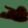 Chocolate lab-Max flopsie (Aurora)