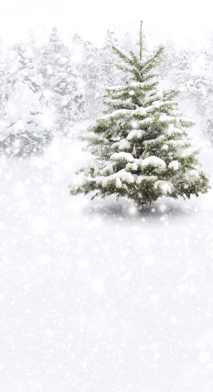 Christmas Scene.Snow Christmas Scene Photography Backdrop When Choosing This Back Drop Please State If You Would Like It Portrait Or Landscape See
