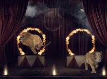 Greatest showman photographers backdrop.Circus backdrop.