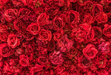 red roses backdrop , great for maternity and valentine shoots