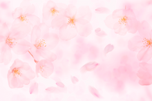 pretty faint pastel blooms photographers backdrop-  Photography Backdrop