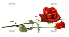 Red Roses on White Offset Auto Plate sku T9252A
