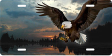Bald Eagle on Lake Brushed Metal Auto Plate sku TB9299SE