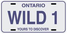 Ontario Prov Plate