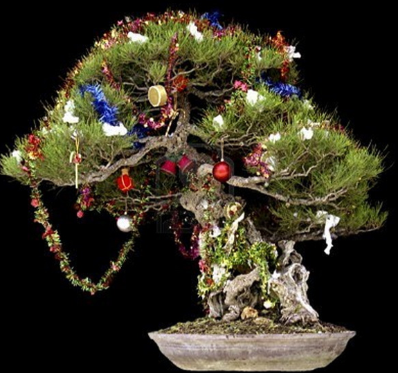 make your bonsai part of your christmas fun