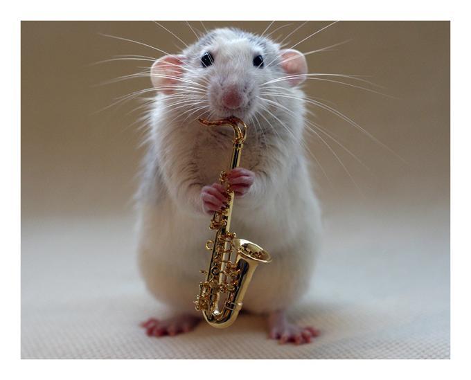 saxophone-rat.jpg