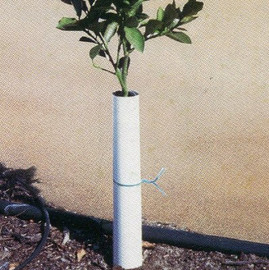 "Protect the trunks of saplings with these corrugated Sprout Saver II tree wraps (8""H x 8""W) (W02)"