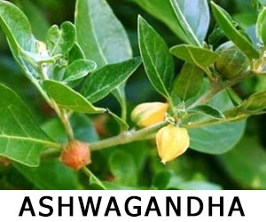 Ashwagandha herbs for vaping