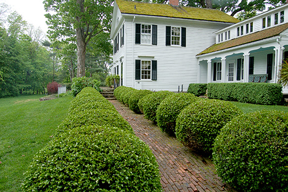 Large white house with beautiful yard and boxwood shrubs.