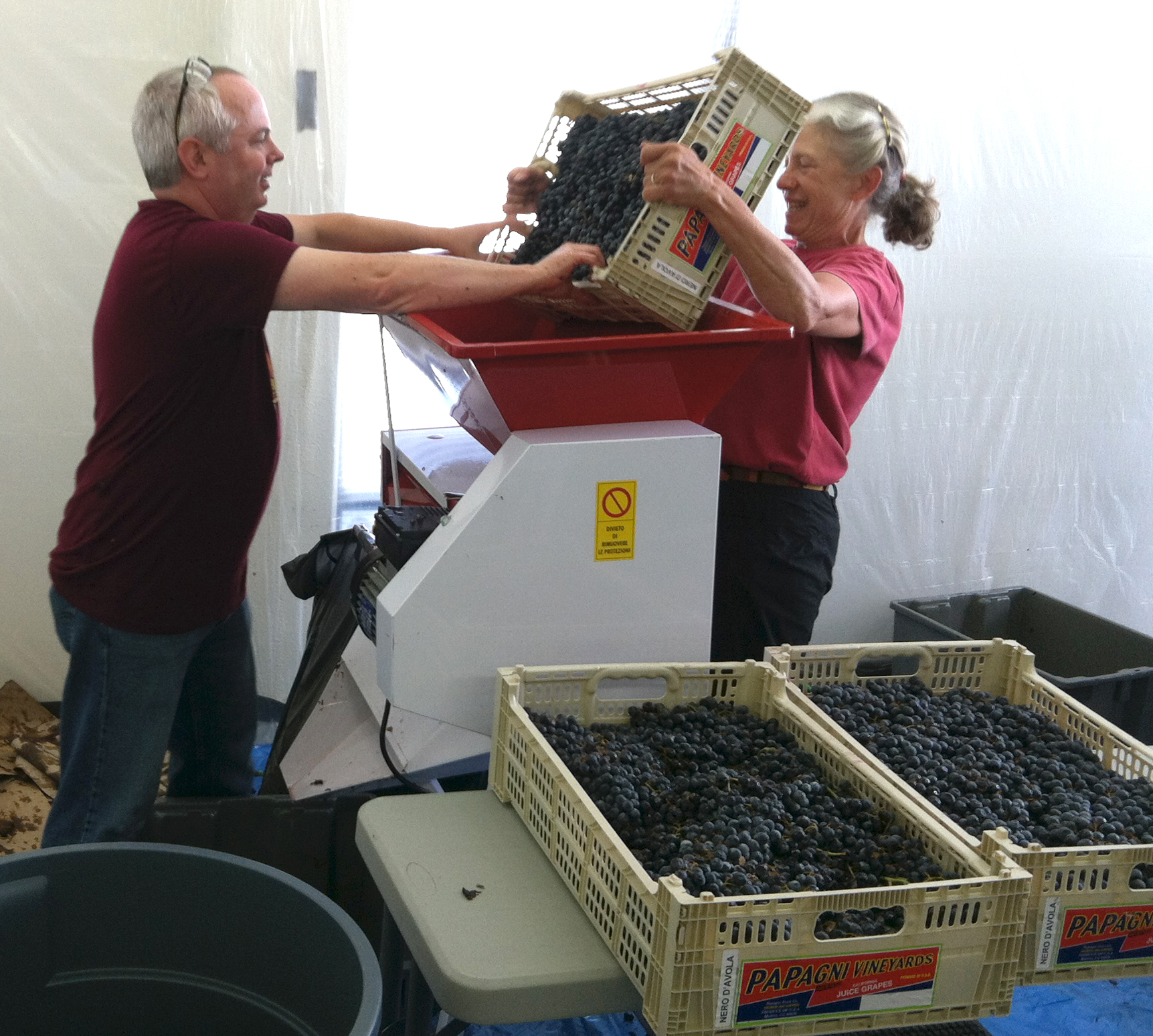 grapes-to-glass-2014-crushing-grapes.jpg