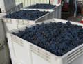 2018 Brehm  Cabernet Sauvignon Moody Vineyard Oregon
